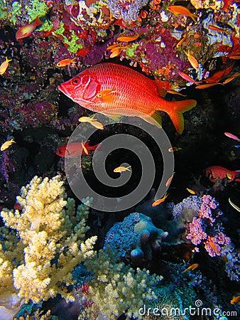 Reef fish at Elphinstone