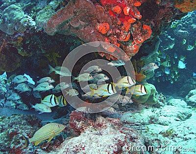 Reef parade