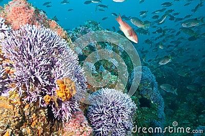 Reef Scene at Farnsworth Banks Catalina