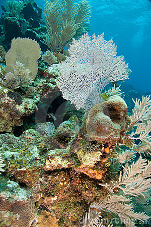 Reef and Sea Fans