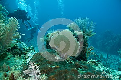 Reef, Sea Fans and divers