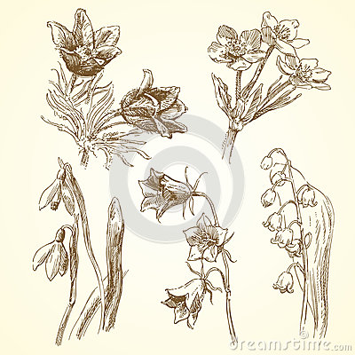 Reeks de lentebloemen
