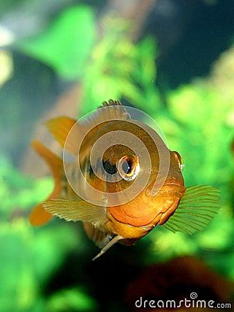 Reeks IV van vissen