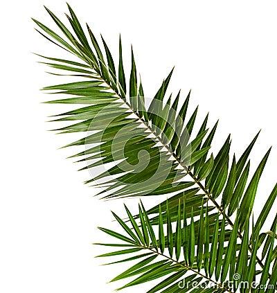 Refeição matinal da palma