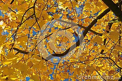 Refeição matinal do outono