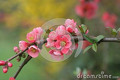 Refeição matinal das flores