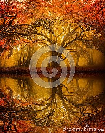 Refelction dell albero di Autumn Fall