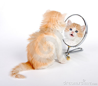 Reflected kitten