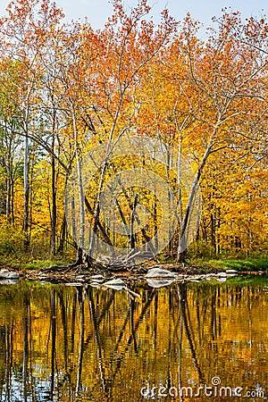Free Reflected Splendor Stock Images - 61589804