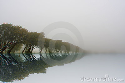 Reflected tree line