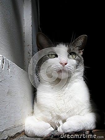 Reflecting Cat