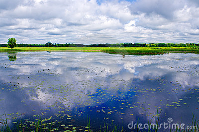 Reflecting clouds, water lilies