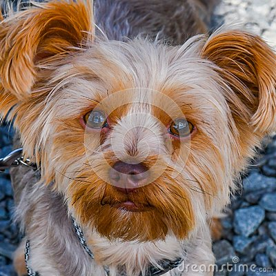 Free Reflecting In The Eyes Of The Puppy Royalty Free Stock Image - 119032836