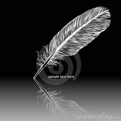 Reflecting white feather