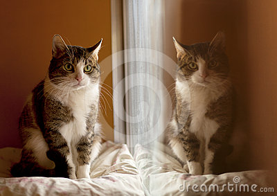 Reflection of a cat