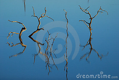 Reflection of dead trees