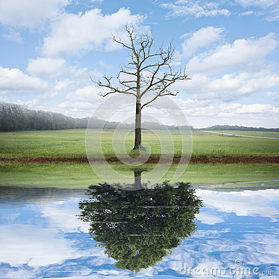 Free Reflection Of Old And New Tree. Stock Images - 52759744
