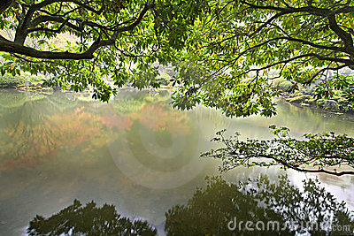 Reflection by the Pond in Japanese Garden