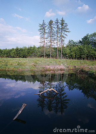 Reflection on the surface of the spring forest