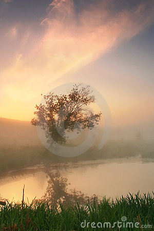 Reflection of a tree in a misty morning