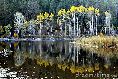 Reflections on an Autumn Lake