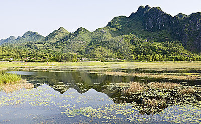 Reflections of Van Long Nature Reserves