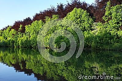 Reflexão da floresta