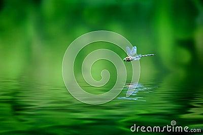 Reflexión de la libélula
