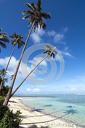 Reflexión de palmeras en una playa tropical