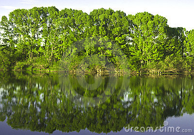 Reflexion in the river