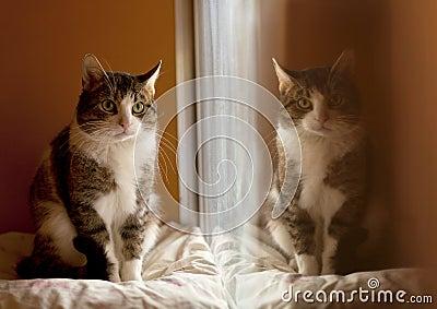 Reflexão de um gato