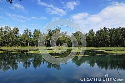 Reflexão do lago