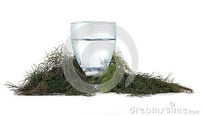 Refreshing water and herbs