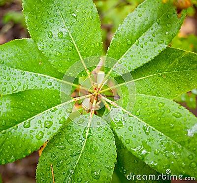 Regen op bladeren