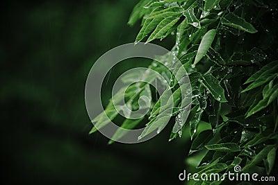 Regen und Blätter