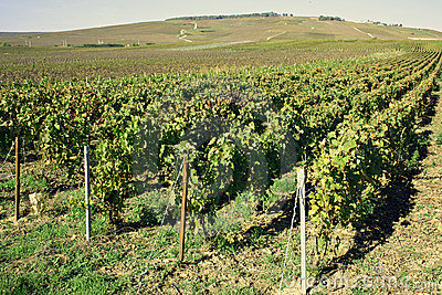 Region of Champagne in France