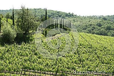 Region of Chianti in Tuscany (Italy)