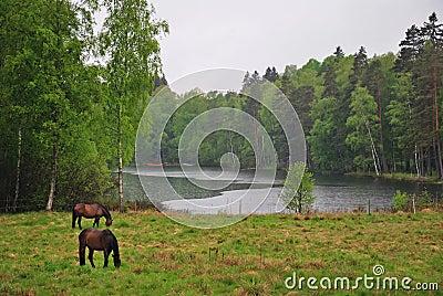 Regnerische schwedische Landschaft