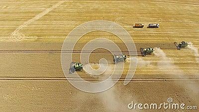 Reifes Weizenbrummen der Erntemaschinenernte stock footage