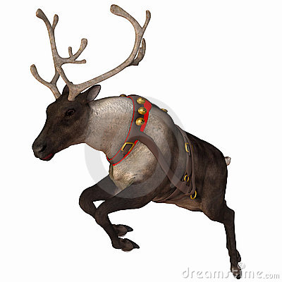 Free Reindeer 1 Stock Photo - 3532730