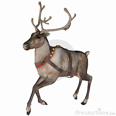 Free Reindeer 3 Stock Images - 3532724
