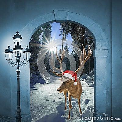 Free Reindeer In Winter Wonderland, Christmas Design Royalty Free Stock Photo - 47348415