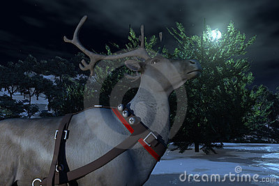Reindeer Looking At Moonlight