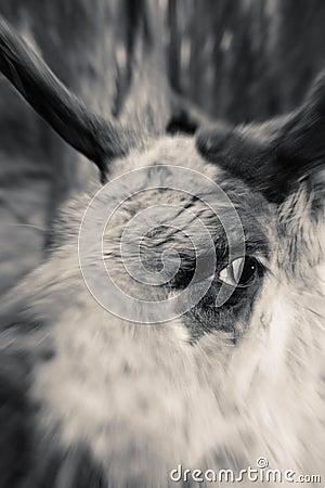 reindeer mad stock photo image 2547800
