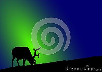 Reindeer northern lights