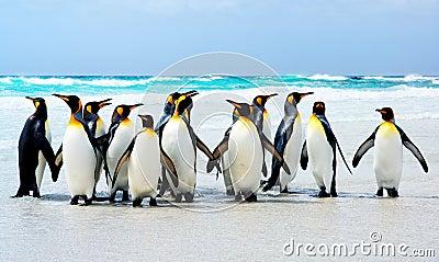 Reis da praia
