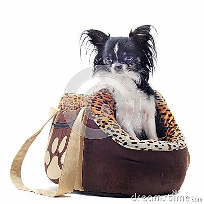 Reisenbeutel und -Chihuahua