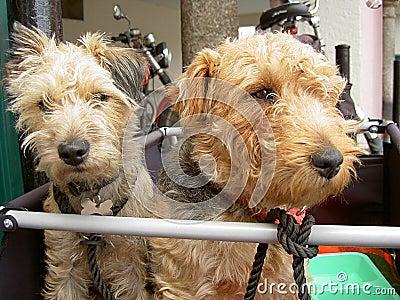 Reisende Hunde