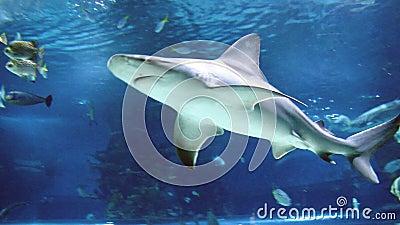 Rekinu i ryba dopłynięcie zbiory