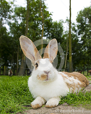 Relax rabbit